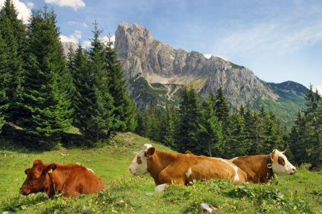 Wandern bei der Bischofsmütze – Bauernhofurlaub im Lammertal