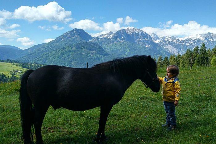 Lammerauhof - Bauernhofurlaub im Lammertal in Salzburg